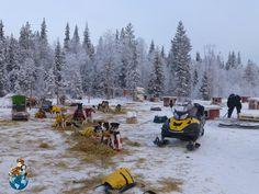 Zona de preparación de los trineos y perros en Bearhillhusky
