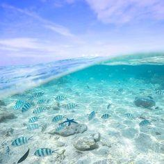 The Great Barrier Reef Great Barrier Reef, Sea Shells, Journey, The Incredibles, Queensland Australia, Island, Explore, Adventure, Park