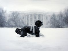 2012 White House Holiday Card