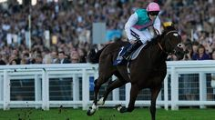 Frankel the Star Attraction on Ascot's Champions Day
