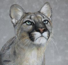 Cougar in Pastel-drawings, by Julie Olsen Tiger Sketch, Lion Sketch, Pastel Drawing, Cat Drawing, Animals And Pets, Baby Animals, Wild Animals, Pencil Drawings Of Animals, Pumas