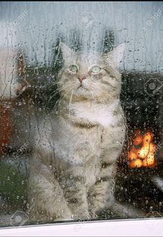 Cat kitten by a rain rainy window pane Rainy Dayz, Rainy Night, Sound Of Rain, Singing In The Rain, Rainy Window, I Love Rain, Autumn Rain, Gatos Cats, All Nature