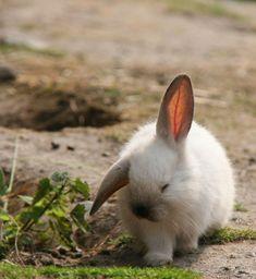 this looks exactly like my old loft ear bunny :/ D'awhhh