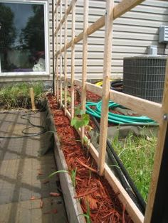 easy trellis made out of cheap lathe boards from the lumber store.  Custom built to fit between the pergola posts - 7x8 feet, less than $$20.