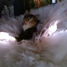 Penny just wants to be a ballerina too...