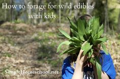 how to forage for wild edibles with kids