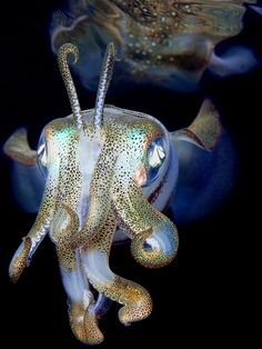 Ghostly Squid. (Andrey Narchuk)