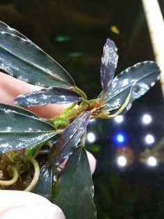 Freshwater Plants, Fresh Water, Plant Leaves, Aqua, Life, Plants, Water