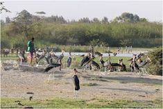 Birdwatching  and  Photography: Le lac Ziwa #birdwatching  and  Photography: Le lac Ziway