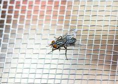 16 tipů, jak se zbavit much