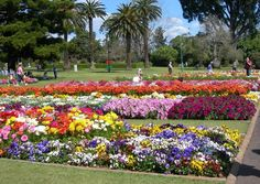 I love SPRING the flowers the air the sunshine, this photo is from Toowoomba carnival of flowers.