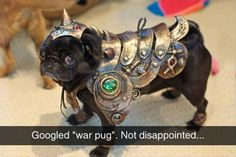 For those of us that thought all along our pug was a knight in shining armour.