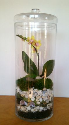 enclosed orchid terrarium - my site Orchid Terrarium, Terrarium Plants, Succulent Terrarium, Terrarium Ideas, Orchid Plants, Orchids, Ikebana, Plant In Glass, Sea Glass