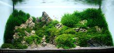 Willow moss planted aquarium