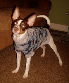 A Dog In A Sweater: Multi-colored Dog Sweater Free crochet pattern custom fit to your dog