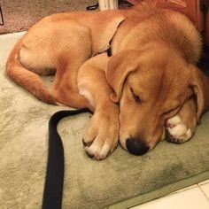 Tired puppy.