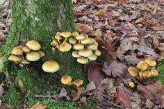 2014-11-23 Leuk groepje paddestoelen onderaan boomstam