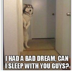 i. love. huskies