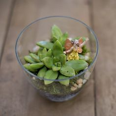 A mini terrarium makes a simple and vibrant Spring or Mother's Day gift. Easy for little hands to make too!