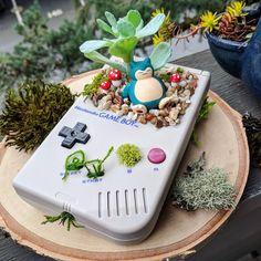 Welcome to the world of Pokemon Clay Pokemon, Gameboy Pokemon, Pokemon Room, Pokemon Craft, Pokemon Decor, Nintendo, Cute Crafts, Crafts To Do, Pokemon Terrarium