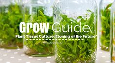 Plant Tissue Culture: Cloning of the Future?