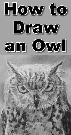Free pencil drawing tutorial teaching you how to draw an owl