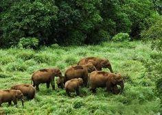 kerala honeymoon tour package Thekkady Periyar Wildlife Sanctuary www.bookkeralatourpackage.in/kerala-tour/kerala-honeymoon-tour-package.php