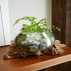 Wood + Glass Terrariums   west elm
