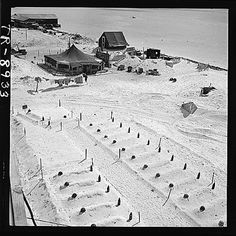 World War II Photograph: Graves of U.S. Marines who died taking Tarawa, before headstones were prepared.  In background are the first tents put up after occupation of the island.