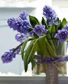 Hyacinter i vase