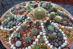 Painted Cactus Rock Garden Video Tutorial