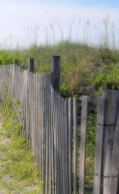 Weathered beach fence with sea grass