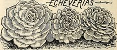 """Image from page 49 of """"Lovett's special catalogue of roses… 