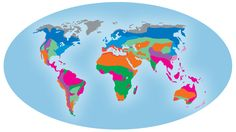 The World's Major Biomes   Kids Discover