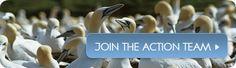 MoD Killing Animals for Cruel Training | Tell-a-Friend | PETA.org.uk - 1