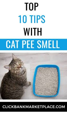 Cat spraying no more  Learn how to stop your cat peeing outside the litter box  Stop your cat peeing and spraying outside the litter box. Create the happy contented and loving cat you have always wanted. Save huge amounts of money on cleaning supplies. Dramatically reduce your stress levels. And say goodbye to inappropriate peeing and spraying forever.  #catpee #catpeeremoval #catspraying #catpeesmell #stopcatspraying Urine Odor, Cat Urine, Cat Pee Smell, Odor Remover, Litter Box, Cleaning Supplies, Stress, Money, Create