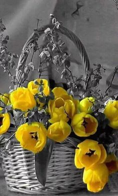 Yellow Splash of Color / Yellow and Gray Splash Photography, Color Photography, Black And White Photography, Photography Flowers, Black And White Colour, Black And White Pictures, Color Yellow, One Color, Color Pop