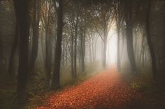 The long\ path through the woods to Granma's house...  I Captured 'Stories Of The Forests' Inspired By My Grandmother's Tales | Bored Panda