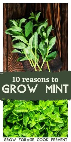 There are many reasons to grow mint in your backyard without fear! It has so many wonderful uses and can be grown without fear of taking over your garden. Learn about how to grow mint in your garden and its many culinary, medicinal, and herbal benefits. Peppermint Tea Benefits, Growing Mint, Herbs For Health, Starting A Garden, Garden Guide, Grow Your Own Food, Herbal Remedies, Natural Remedies, Medicinal Plants