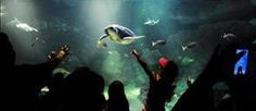 SeaWorld guests enjoy Turtle Reef. AKontheGO is headed to San Diego in a few weeks for some sun and fun!