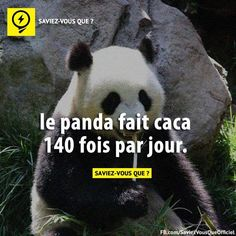 À dire aux gagas des pandas😂 True Stories, Did You Know, Knowing You, Affirmations, Fun Facts, Panda, Funny Quotes, Knowledge, Science