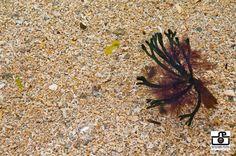 Seaweed harvesting site Seaweed, Ireland, Plants, Irish, Plant, Planets
