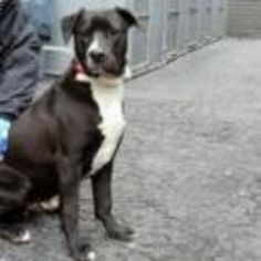 Manhatten NY.  Sledge.  Male.  11 mths.  Dies in a.m.  See Urgent Part 2 on fb.
