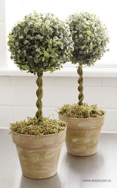 diy topiary trees in