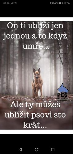 Belgian Malinois, Bff, Deep, Funny, Quotes, Quotations, Qoutes, Malinois Dog, Ha Ha