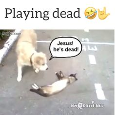 Ten Heavenly Reasons Why Cats Make the Best Pets Funny Animal Memes, Dog Memes, Funny Animal Videos, Funny Animal Pictures, Cute Funny Animals, Cute Baby Animals, Animals And Pets, Cat Vs Dog, Cute Kittens