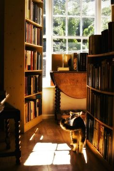 A Cat enters the Library ~ Looking for a Good Book to Read?