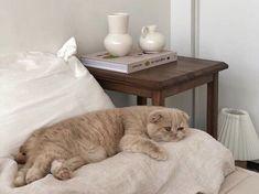 kinda just wanna write a book cats pets cute Animals And Pets, Baby Animals, Funny Animals, Cute Animals, Crazy Cat Lady, Crazy Cats, I Love Cats, Cute Cats, Cat Aesthetic