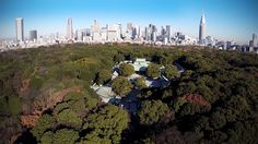 Flying high over Meiji Jingu.