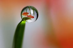 Pictures of Flowers with Raindrops | ... raindrop photos by brian valentine are really fun his flower raindrops